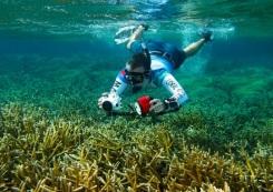 Unique Coral Reef Receives Federal Protection in Honduras / Ocean Great Ideas