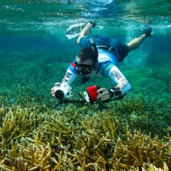 Unique Coral Reef Receives Federal Protection in Honduras / Ocean Great Ideas