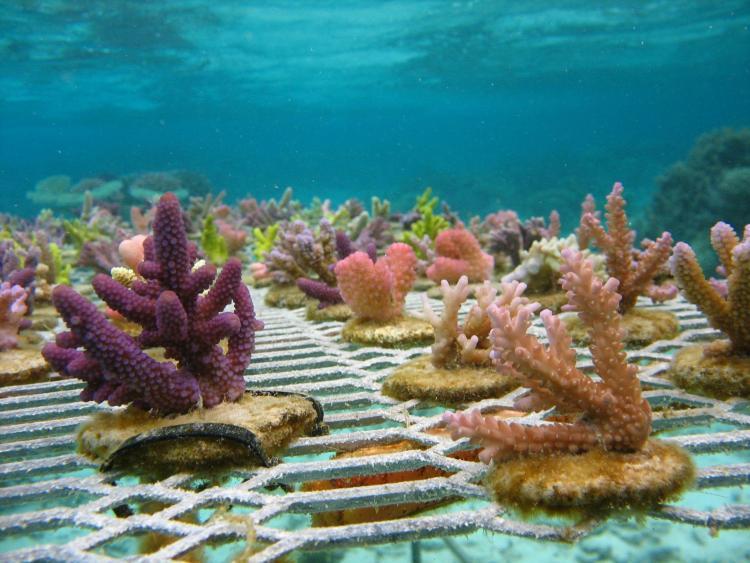 Fishermen into Coral Gardening in Fiji! / Ocean Great Ideas