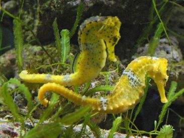 Some little things we know about Sea Horses / Ocean Great Ideas