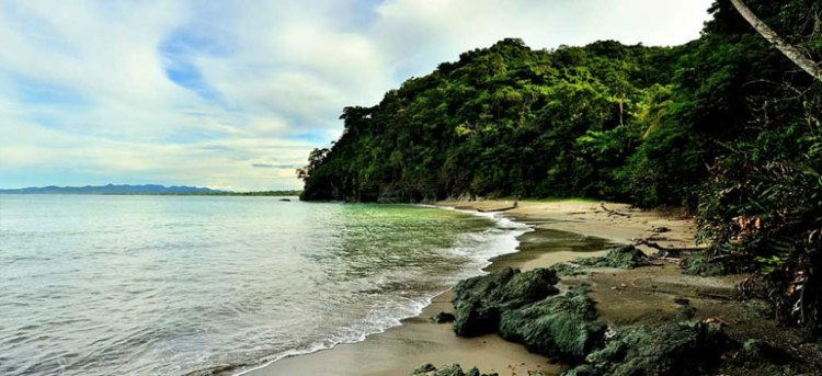 Colombia's new National Park is a sanctuary for hawksbill and leatherback Turtles / Ocean Great Ideas