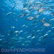 Scuba Dive Slideshow
