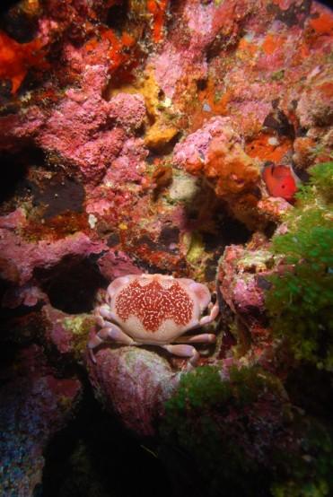 Marine life / Fernando de Noronha Archipelago National Marine Park, Brazil / Ocean Great Ideas