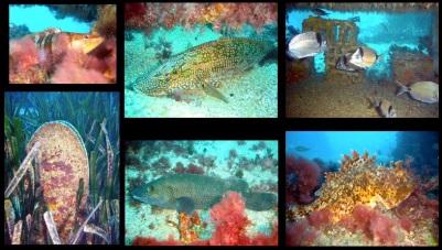 Sentier sous marin du Parc Marin Cote Bleue / Ocean Great Ideas