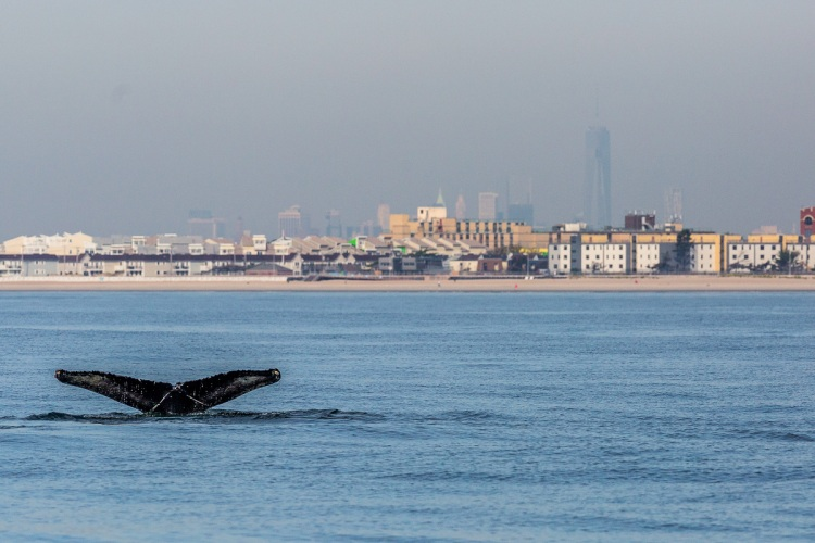 A whale dives, with Manhattan's One World Trade Centre, also known as the Freedom Tower, in the background / Ocean Great Ideas